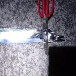 刀狩り(浮き釣り)
