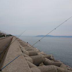 カレイ釣れました。