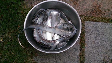 忠岡高場で太刀魚6匹ゲット