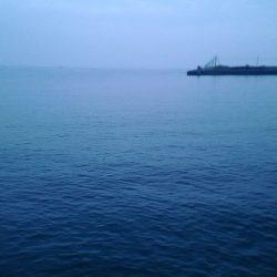 大津川河口 朝太刀魚