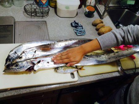 この時期の太刀魚大きいですね、子供との初の連携プレーで納得の釣果
