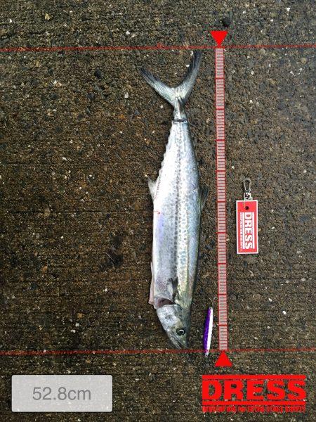 太刀魚→ショアジギ