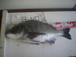 姫路市立遊魚センター 探り釣りでチヌ、ガシラほか