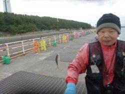 大阪南港海釣り公園 サビキで良型アジ
