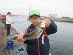 尼崎海釣り公園 サビキ・ウキ釣りなどの釣果