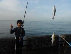 和歌山北港魚つり公園 イサキ連掛け!