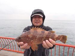 神戸市立平磯海づり公園 ウキ釣りで良型アコウ