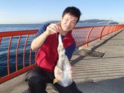 平磯海釣り公園 エギングでアオリイカ520g