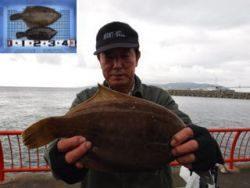 神戸市立平磯海づり公園、投げ釣りカレイ釣果