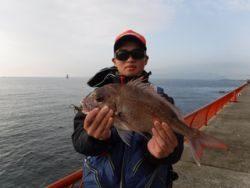 神戸市立平磯海づり公園 シラサのウキ釣りでマダイ46cm