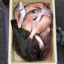 マリーナシティ海洋釣り堀 マダイ&ヒラメの釣果