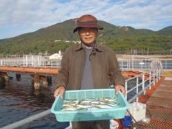 須磨海釣り公園 サビキでアジ22尾