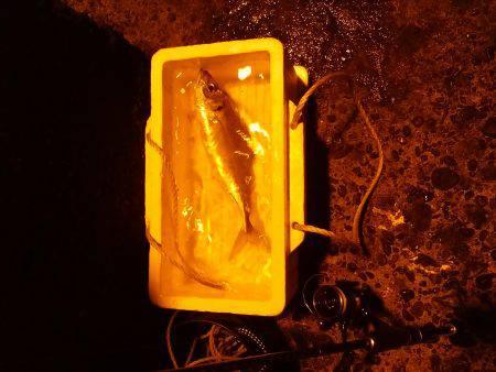 新年初釣り☆ •••で、出た!!