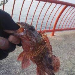 初釣りはガシラ