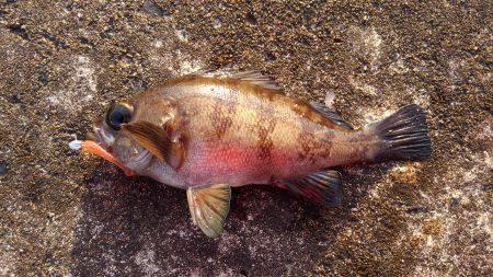 ミップル近くで釣りをする(笑)。