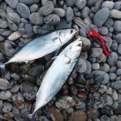 初釣りはアジのカゴ釣りで♪