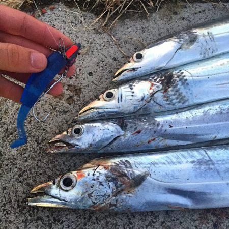 タチウオまだ釣れてます!