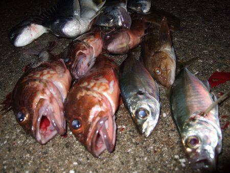 魚種豊富。真冬なのに