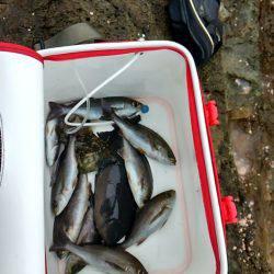 串本須江でグレ釣り