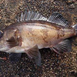 ミップル周辺で釣りをする