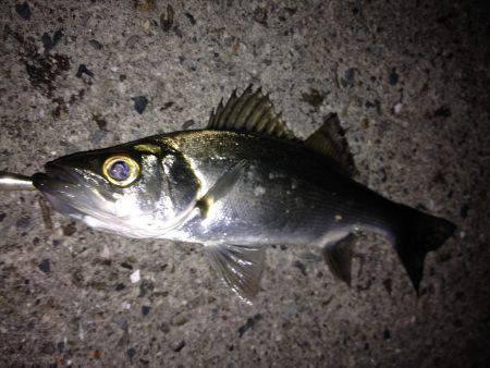 初釣りはミニヒラ(*_*)