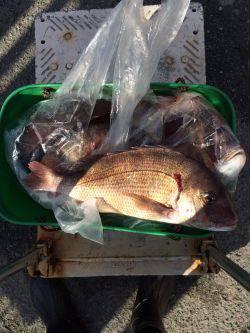 和歌山マリーナシティ海洋釣り堀で新年マダイ