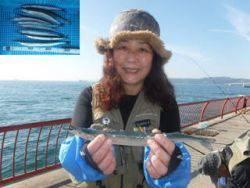 神戸市立平磯海づり公園 ウキ釣りでサヨリ