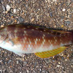 ミップル周辺で釣りをする(笑)。