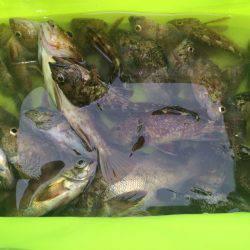 根魚GET!!