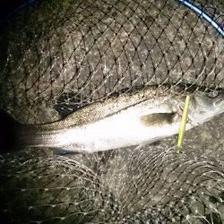 マッタリ釣り。