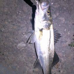 1匹ですが釣れました。