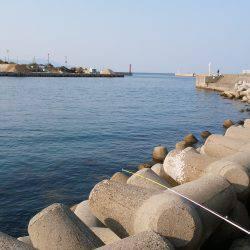 洲本港のテトラで穴釣り