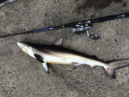 サメのサイトフィッシング。強烈な引きは楽しめました。