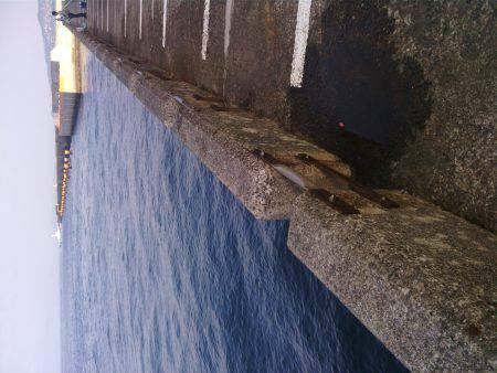北港釣り公園ハマチ
