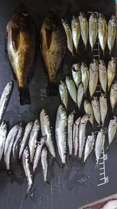 夜のサビキ釣り
