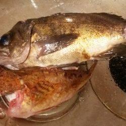 探り釣りで根魚