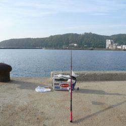 洲本港で満足な釣果