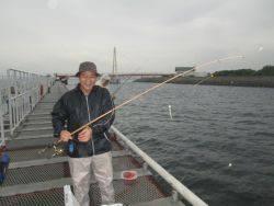 尼崎市立魚つり公園でサビキ釣り