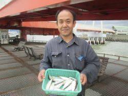 尼崎市立魚つり公園 カタクチイワシ、サッパ