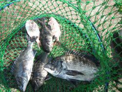 和歌山北港魚つり公園 チヌ、グレほか