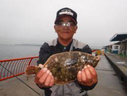 平磯海釣り公園 雨天の投げ釣りでカレイ