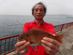 神戸市立平磯海づり公園 投げ釣りでマダイ