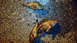 餌で根魚狙い