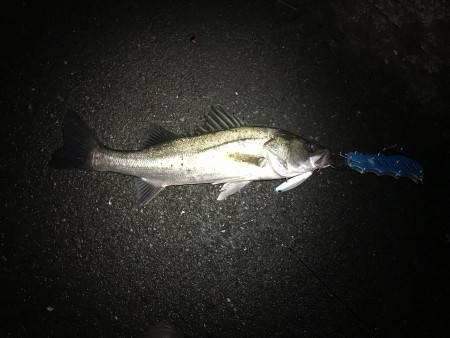 豪雨の前に釣りへ