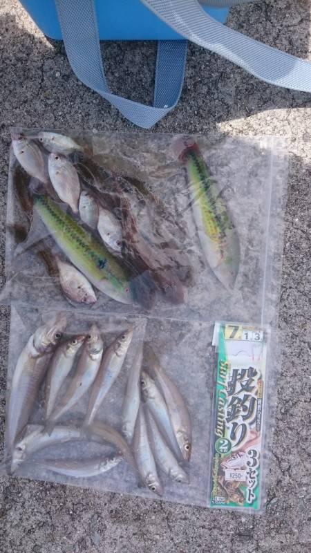夏のシロギス釣り