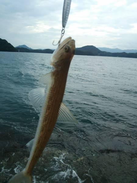 初めて見た魚です
