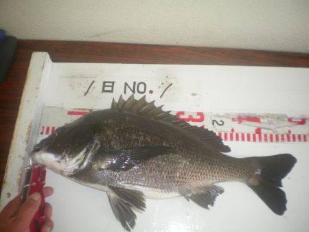 姫路市立遊魚センター 投稿