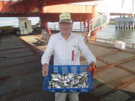 尼崎市立魚つり公園 サビキアジ朝一入れ喰いでした♪
