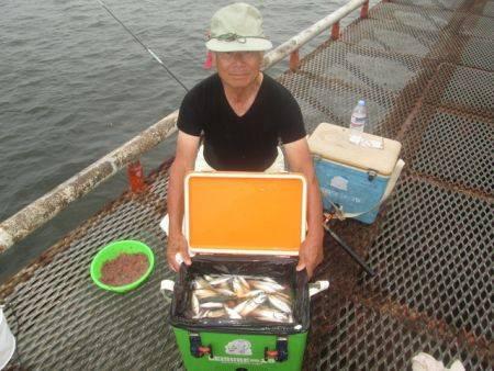 尼崎市立魚つり公園 アジ、サバ、サッパ