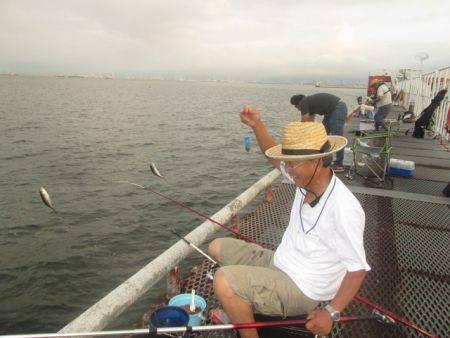 尼崎市立魚つり公園 アジ、サバ